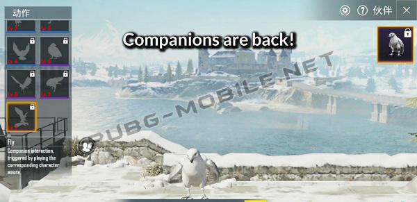 Added companion feature